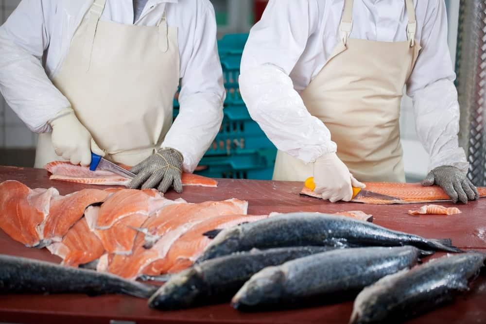חנות דגים